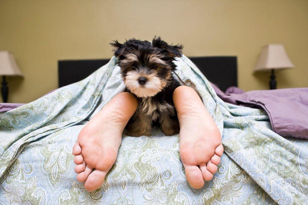 Dormire con il cane fa riposare meglio ma averlo in ufficio?