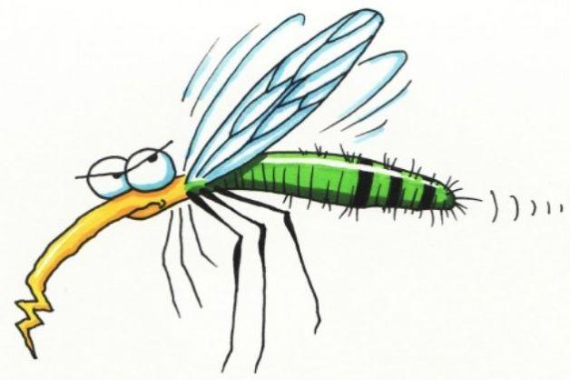 Zanzara Chikungunya da non sottovalutare a Roma