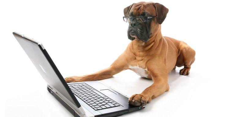 Cani in ufficio: una presenza positiva per i loro padroni
