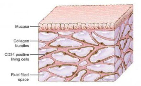 L'organo più grande del corpo umano, l'interstizio