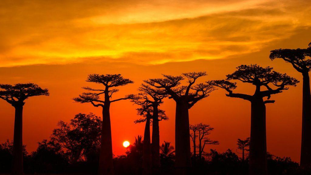 Denuncia della Nature Plants: i Baobab sono a rischio